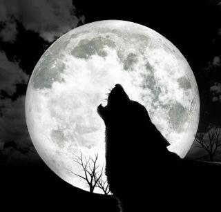 8-19-wolf_howl